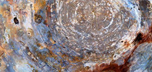 bois-fossile